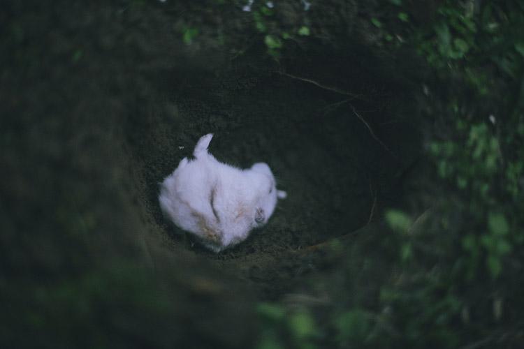 影像日記,回到天堂,老鼠,葬禮