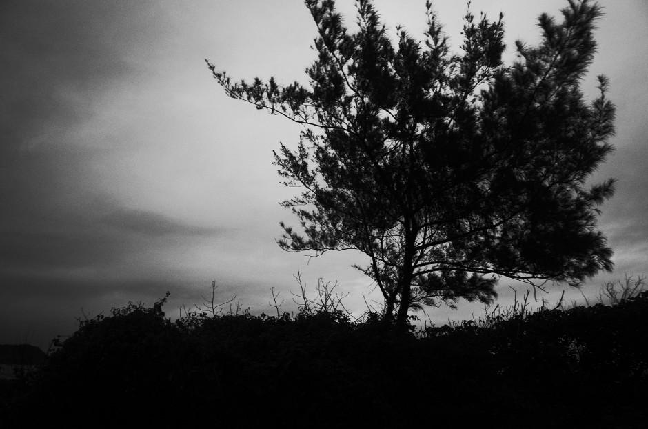 心象攝影-黑白,樹,池上