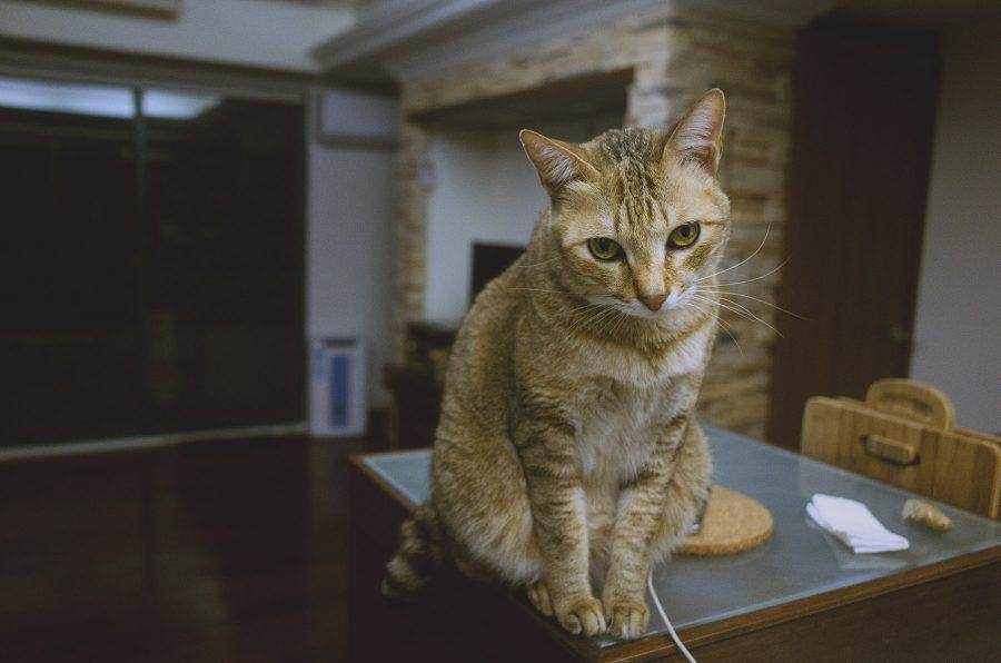 gr,貓,生活,攝影日記