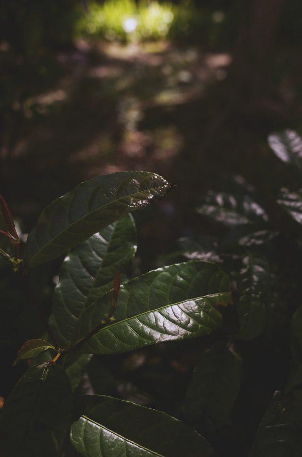 光,葉,緩慢